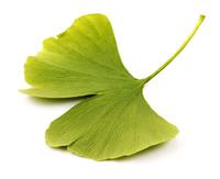 Гинкго Билоба (сухие листья) чай